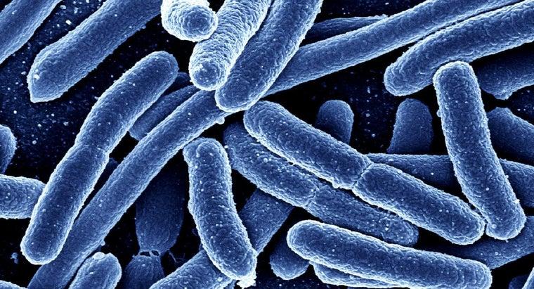 eubacteria-archaebacteria-differ