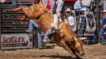 How Much Money Do Bull Riders Make?