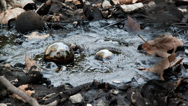 Where Does Tar Come From?