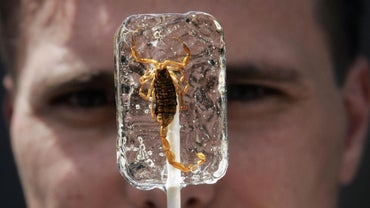 Can You Eat a Scorpion Lollipop?