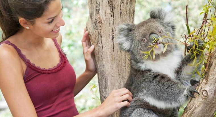 can-adopt-koala