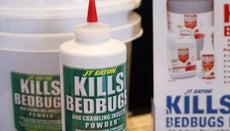 How Do You Kill Bedbugs?