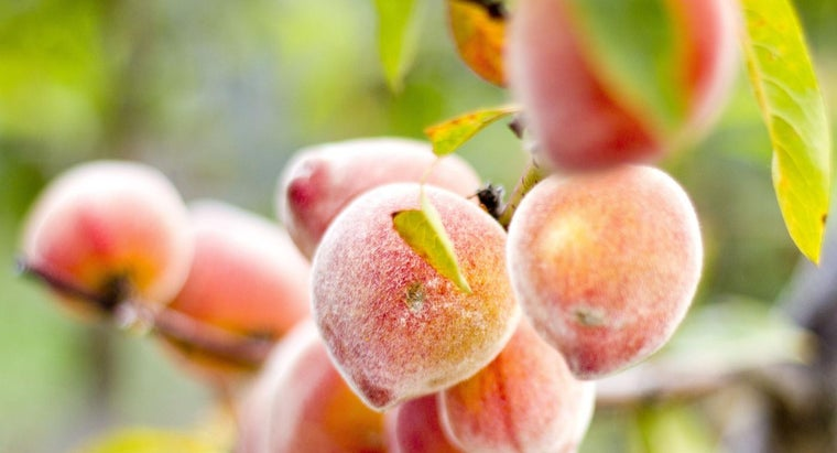 differences-between-nectarine-peach