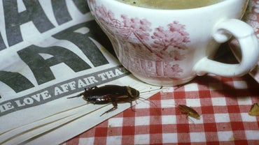 How Do You Get Rid of Roaches Fast?