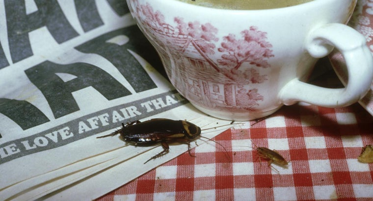 rid-roaches-fast