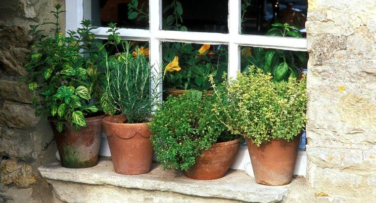 tips-growing-herbs-pots