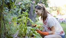 How Do You Start a Vegetable Garden?