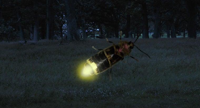 lightening-bugs