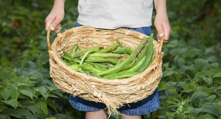 grow-string-beans