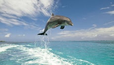What Are the Differences Between Dolphins and Porpoises?