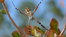 What Is a Silver Garden Spider?