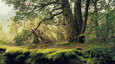 What Are Some of the Abiotic Factors in the Temperate Forest?
