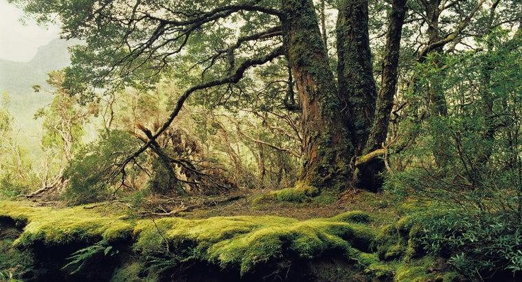 abiotic-factors-temperate-forest