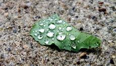 Why Is Acid Rain a Problem?
