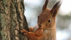 When Do Acorns Fall Off of Oak Trees?