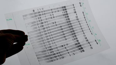 How Do You Activate an Ancestry DNA Test Online?