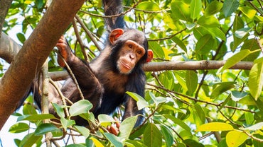 What Are Some of the Adaptations Exhibited by Monkeys?