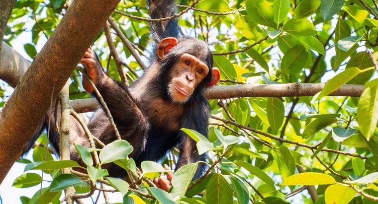 adaptations-exhibited-monkeys