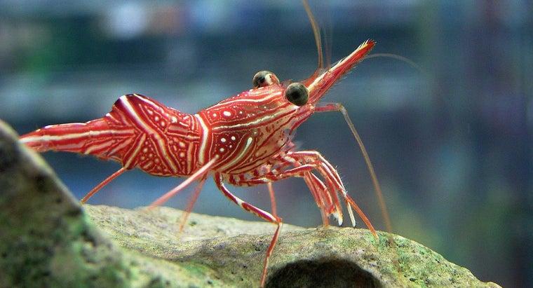 adaptations-shrimp
