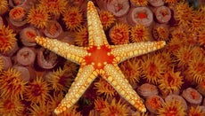 What Adaptations Do Starfish Exhibit?