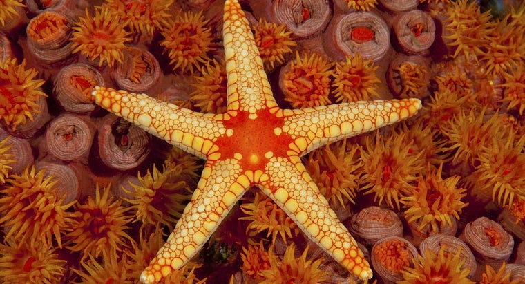 adaptations-starfish-exhibit