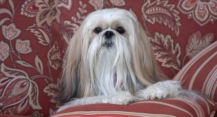 adopt-dog-shih-tzu-rescue