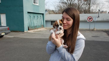 How Do You Adopt a Pitbull Puppy?