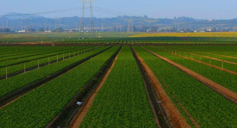 advantages-disadvantages-agriculture