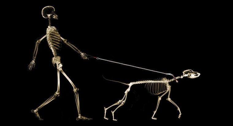 advantages-disadvantages-endoskeleton
