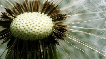 What Are the Advantages of Seeds Over Spores?