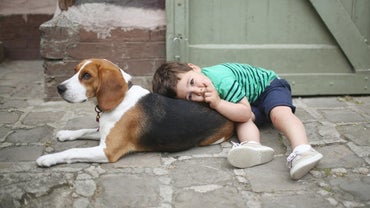 What Are the Most Affectionate Dogs?