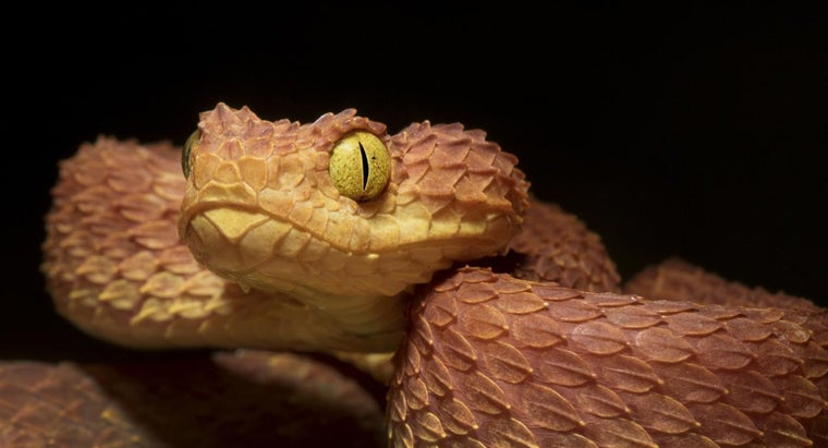 africa-s-deadly-snakes