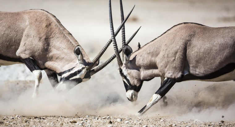 african-antelope-called