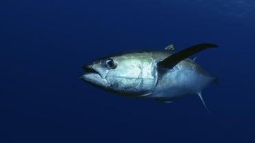 What Is Ahi Tuna?