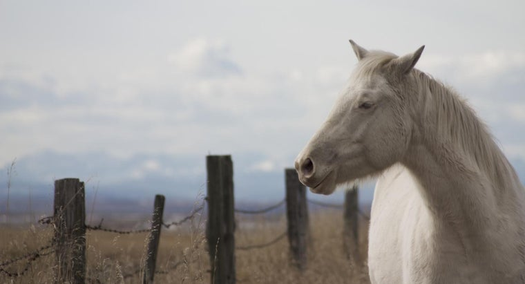 albino-horse