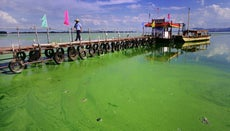 Where Do Algae Live?