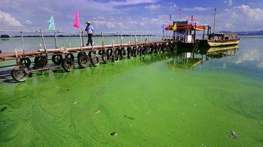 Where Do Algae Live?