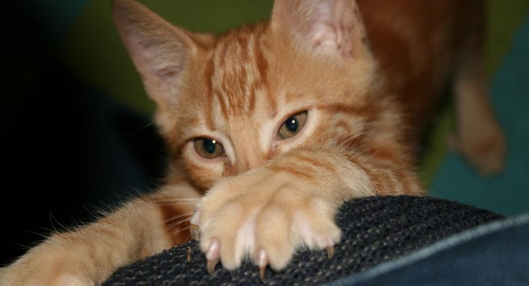 alternatives-declawing