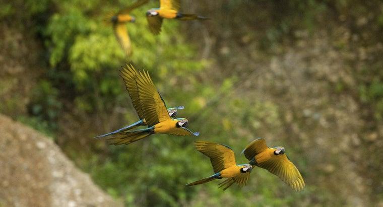 amazon-rain-forest-located