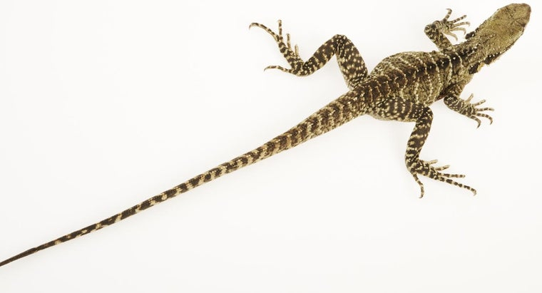 animal-longest-tail