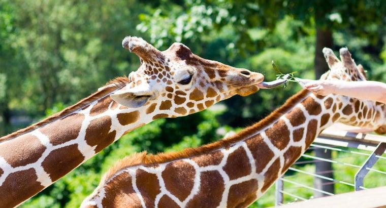 animal-longest-tongue