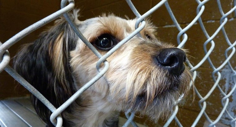 animal-shelters-funded
