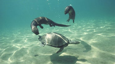 How Do Animals Communicate Underwater?