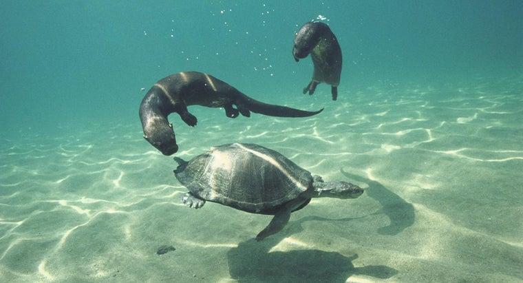 animals-communicate-underwater