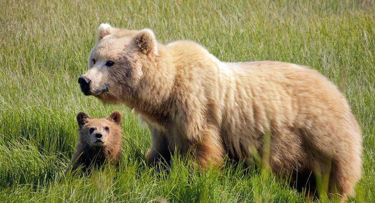 animals-eat-bears