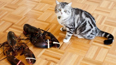 What Animals Eat Lobsters?