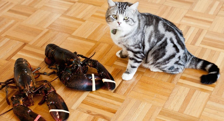 animals-eat-lobsters