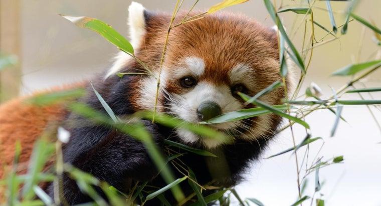 animals-eat-plants