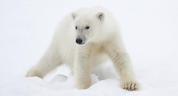 animals-found-polar-region