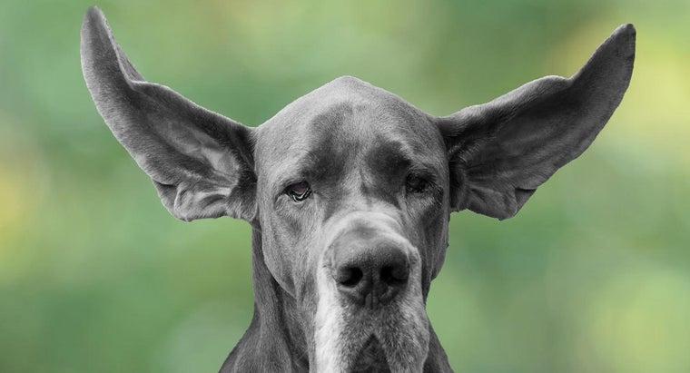 animals-hear